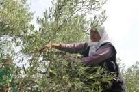 Ruhsar Pekcan - Zeytin Ve Zeytinyağı İhracatçıları Kendileri Ve Üreticilere Verilen Desteklerin Arttırılmasını İstedi