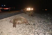 Otomobil Koyun Sürüsüne Daldı Açıklaması 40 Koyun Telef Oldu