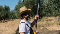Dr. Ümit Aktaş Açıklaması 'Zeytin Ağacının Her Şeyi Şifadır'