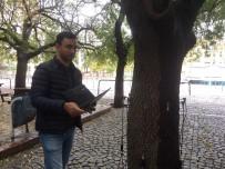 Risk Oluşturan Ağaçlar 'Sonik Tomografi' İle Tespit Ediliyor