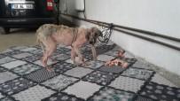 İşkence Yapıldığı Öne Sürülen Köpek Bulundu