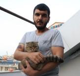 Kayıp Kediyi Bulana 2 Bin Lira Ödül