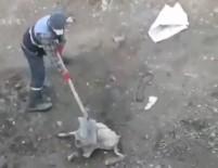 Köpeğe İşkence İddiasıyla 3 Personel Açığa Alındı