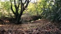 KENT ORMANI - Karadeniz'de Sonbahar Güzelliği