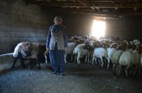 KÜRKÇÜLER - Koyunları Çalınan Ayşe Teyzenin Gözyaşları Dindi