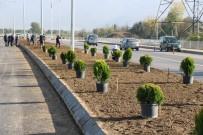 KALDIRIMLAR - Salim Dervişoğlu Caddesi Yeşillendirildi