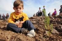 20 Bin Fidan Günlerce Yanan Ormanda Toprakla Buluştu