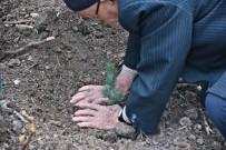 ORMAN İŞLETME MÜDÜRÜ - Akhisar Belediyesi Ve Kaymakamlığının Desteğiyle 27 Bin Fidan Toprakla Buluştu