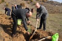 BOZÜYÜK BELEDİYESİ - Bozüyük'te Sedir Fidanları Toprakla Buluştu
