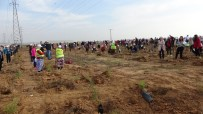 Çorlu'da 20 Bin Fidan Toprakla Buluştu