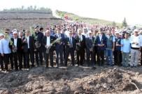 Erdemli'de 50 Bin Fidan Toprakla Buluştu