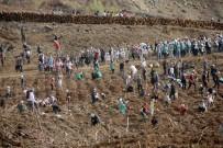 Fethiye'de 10 Bin 300 Fidan Toprakla Buluştu