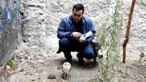 Manisa'da Yaralı Bulunan Peçeli Baykuş Tedavi Altına Alındı