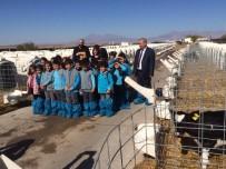 Minik Öğrenciler Besi Çiftliğinde Ders İşledi
