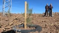 Ot Bitmeyen Yeri Taşıma Toprakla Ormana Dönüştürdü