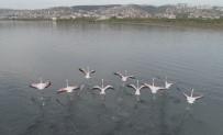(Özel) İzmit Körfezi, 'Kuş Cenneti' Haline Geldi