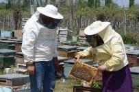Sahte Bal, Arıcıların Emeğini Çalıyor, Gerçek Balın Pazarlanmasını Etkiliyor