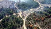 Tavşanlı'da Orman Yangınında 3 Hektar Alan Zarar Gördü