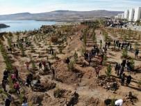 Tunceli'de 230 Bin Fidan Toprakla Buluştu