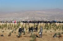 Van'da 70 Bin Fidan Toprakla Buluşturuldu