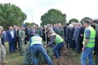 Yalova'da 31 Bin 350 Ağaç Dikildi