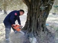 Zeytin Ağacının İçinde Mahsur Kalan Köpek Yavrularını İtfaiye Kurtardı, Anneleri İse Öldü