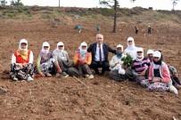 Başkan Davut Aydın, Mevsimlik İşçilerle Fidan Dikti