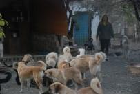 Karı Koca, Emanet 100'Ün Üzerinde Köpeğe Gözü Gibi Bakıyor