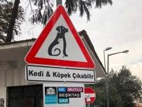 BEŞIKTAŞ BELEDIYESI - Beşiktaş'ın Sokaklarında 'Kedi Ve Köpek Çıkabilir' Farkındalığı
