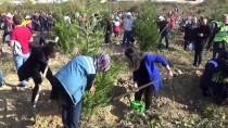 Prof. Dr. Kırdar Açıklaması 'Topraklı Fidanın Veya Tüplü Fidanın Dikim Mevsimi Yoktur'