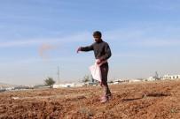MEVSİMLİK İŞÇİ - Şanlıurfa'da Buğday Ekim Mesaisi Başladı
