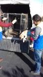 Tuşba Belediyesi Ekipleri Köpek Yavrusuna Sahip Çıktı