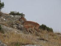 Usulsüz Avlanılan Av Hayvanlarının Etleri İmha Edildi