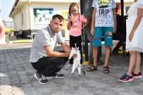 AKSARAY ÜNIVERSITESI - Aksaray Belediyesi Sokak Hayvanlarına Şefkat Eli Uzatıyor