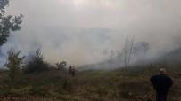 ÖRENCIK - Altınova'da Orman Yangını