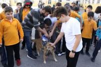 Okullara Sahiplendirilen Sokak Hayvanları Öğrencilerin İlgi Odağı Oldu