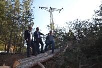 ORMAN ARAZİSİ - Tosya Dipsizgöl'de Enerji Nakil Hattı Yenileniyor
