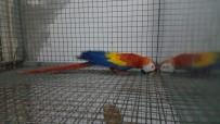 Zeytinburnu'nda 'Papağan' Operasyonu Açıklaması 2 Gözaltı