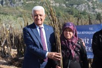 Büyükşehirden Kırsal Kalkınmaya 55 Bin Ceviz Fidanı Desteği