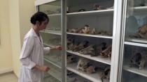 Kırşehir'de Milyon Yıllık Fosiller Arkeoloji Müzesinde Sergilenecek