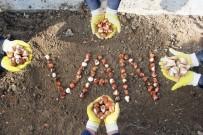 Van'da 220 Bin Lale, Sümbül Ve Nergis Soğanı Dikildi