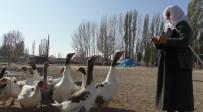 Kars'ta, 'Kar Yiyen Kazlar' Kesilmeye Başladı