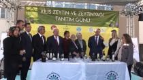CANAN KARATAY - 'Kilis Zeytin Ve Zeytinyağı Tanıtım Günü'