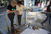 Sokak Hayvanları Görücüye Çıktı