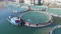 Türkiye'de Ençok Elazığ'da Üretilen Alabalık 18 Bin Tona, Somon Bin Tona Yükseldi