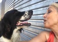 Yerel Hayvan Koruma Görevlisi 'Sokak Köpeği' Davasında Beraat Etti