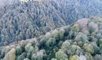 Kocaeli Ormanlarında Renk Cümbüşü