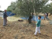 Burhaniye'de Küçük Sırıkçı İlgi Odağı Oldu