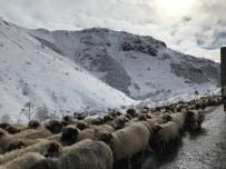 Kar Altında Koyunların Dönüşü Başladı