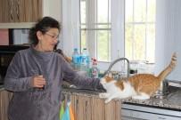 (Özel) Emekli Maaşını Sokak Hayvanlarına Harcıyor